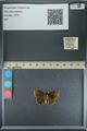 http://mczbase.mcz.harvard.edu/specimen_images/ent-lepidoptera/images/2013_08_03/IMG_147547.JPG