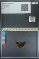 http://mczbase.mcz.harvard.edu/specimen_images/ent-lepidoptera/images/2013_08_03/IMG_147548.JPG