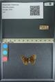 http://mczbase.mcz.harvard.edu/specimen_images/ent-lepidoptera/images/2013_08_03/IMG_147549.JPG