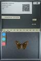 http://mczbase.mcz.harvard.edu/specimen_images/ent-lepidoptera/images/2013_08_03/IMG_147566.JPG