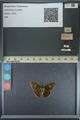 http://mczbase.mcz.harvard.edu/specimen_images/ent-lepidoptera/images/2013_08_03/IMG_147574.JPG