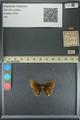 http://mczbase.mcz.harvard.edu/specimen_images/ent-lepidoptera/images/2013_08_05/IMG_147580.JPG
