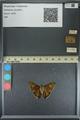 http://mczbase.mcz.harvard.edu/specimen_images/ent-lepidoptera/images/2013_08_05/IMG_147591.JPG