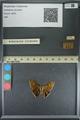 http://mczbase.mcz.harvard.edu/specimen_images/ent-lepidoptera/images/2013_08_05/IMG_147593.JPG