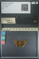 http://mczbase.mcz.harvard.edu/specimen_images/ent-lepidoptera/images/2013_08_05/IMG_147605.JPG