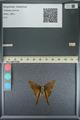 http://mczbase.mcz.harvard.edu/specimen_images/ent-lepidoptera/images/2013_08_08/IMG_148018.JPG