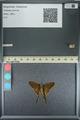 http://mczbase.mcz.harvard.edu/specimen_images/ent-lepidoptera/images/2013_08_08/IMG_148019.JPG
