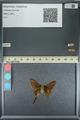http://mczbase.mcz.harvard.edu/specimen_images/ent-lepidoptera/images/2013_08_08/IMG_148023.JPG