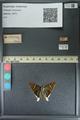 http://mczbase.mcz.harvard.edu/specimen_images/ent-lepidoptera/images/2013_08_09/IMG_148073.JPG