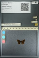 http://mczbase.mcz.harvard.edu/specimen_images/ent-lepidoptera/images/2013_08_22/IMG_148981.JPG