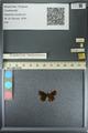 http://mczbase.mcz.harvard.edu/specimen_images/ent-lepidoptera/images/2013_08_22/IMG_148982.JPG