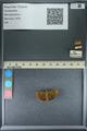 http://mczbase.mcz.harvard.edu/specimen_images/ent-lepidoptera/images/2013_08_23/IMG_149238.JPG