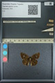 http://mczbase.mcz.harvard.edu/specimen_images/ent-lepidoptera/images/2013_09_07/IMG_149810.JPG