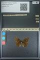 http://mczbase.mcz.harvard.edu/specimen_images/ent-lepidoptera/images/2013_09_07/IMG_149812.JPG