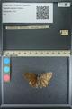 http://mczbase.mcz.harvard.edu/specimen_images/ent-lepidoptera/images/2013_09_07/IMG_149813.JPG