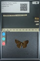 http://mczbase.mcz.harvard.edu/specimen_images/ent-lepidoptera/images/2013_09_07/IMG_149814.JPG