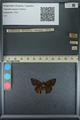 http://mczbase.mcz.harvard.edu/specimen_images/ent-lepidoptera/images/2013_09_07/IMG_149815.JPG