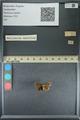 http://mczbase.mcz.harvard.edu/specimen_images/ent-lepidoptera/images/2013_09_20/IMG_149992.JPG