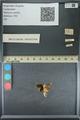 http://mczbase.mcz.harvard.edu/specimen_images/ent-lepidoptera/images/2013_09_20/IMG_150017.JPG