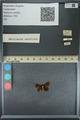 http://mczbase.mcz.harvard.edu/specimen_images/ent-lepidoptera/images/2013_09_20/IMG_150019.JPG