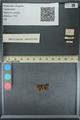 http://mczbase.mcz.harvard.edu/specimen_images/ent-lepidoptera/images/2013_09_20/IMG_150020.JPG
