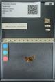 http://mczbase.mcz.harvard.edu/specimen_images/ent-lepidoptera/images/2013_09_20/IMG_150021.JPG