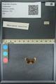 http://mczbase.mcz.harvard.edu/specimen_images/ent-lepidoptera/images/2013_09_20/IMG_150024.JPG