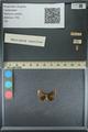 http://mczbase.mcz.harvard.edu/specimen_images/ent-lepidoptera/images/2013_09_20/IMG_150025.JPG