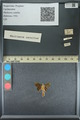 http://mczbase.mcz.harvard.edu/specimen_images/ent-lepidoptera/images/2013_09_20/IMG_150027.JPG