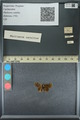 http://mczbase.mcz.harvard.edu/specimen_images/ent-lepidoptera/images/2013_09_20/IMG_150028.JPG