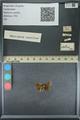 http://mczbase.mcz.harvard.edu/specimen_images/ent-lepidoptera/images/2013_09_20/IMG_150032.JPG