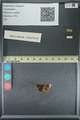 http://mczbase.mcz.harvard.edu/specimen_images/ent-lepidoptera/images/2013_09_20/IMG_150033.JPG