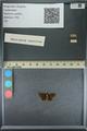 http://mczbase.mcz.harvard.edu/specimen_images/ent-lepidoptera/images/2013_09_20/IMG_150034.JPG