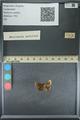 http://mczbase.mcz.harvard.edu/specimen_images/ent-lepidoptera/images/2013_09_20/IMG_150037.JPG