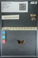 http://mczbase.mcz.harvard.edu/specimen_images/ent-lepidoptera/images/2013_09_20/IMG_150044.JPG