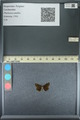 http://mczbase.mcz.harvard.edu/specimen_images/ent-lepidoptera/images/2013_09_28/IMG_150075.JPG