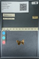 http://mczbase.mcz.harvard.edu/specimen_images/ent-lepidoptera/images/2013_09_28/IMG_150111.JPG