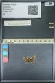 http://mczbase.mcz.harvard.edu/specimen_images/ent-lepidoptera/images/2013_09_28/IMG_150122.JPG
