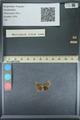 http://mczbase.mcz.harvard.edu/specimen_images/ent-lepidoptera/images/2013_09_28/IMG_150123.JPG