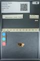 http://mczbase.mcz.harvard.edu/specimen_images/ent-lepidoptera/images/2013_09_28/IMG_150134.JPG