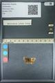 http://mczbase.mcz.harvard.edu/specimen_images/ent-lepidoptera/images/2013_09_28/IMG_150135.JPG