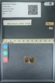 http://mczbase.mcz.harvard.edu/specimen_images/ent-lepidoptera/images/2013_09_28/IMG_150136.JPG