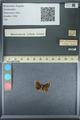 http://mczbase.mcz.harvard.edu/specimen_images/ent-lepidoptera/images/2013_09_28/IMG_150137.JPG