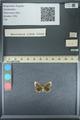 http://mczbase.mcz.harvard.edu/specimen_images/ent-lepidoptera/images/2013_09_28/IMG_150138.JPG