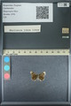 http://mczbase.mcz.harvard.edu/specimen_images/ent-lepidoptera/images/2013_09_28/IMG_150139.JPG