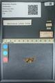 http://mczbase.mcz.harvard.edu/specimen_images/ent-lepidoptera/images/2013_09_28/IMG_150140.JPG