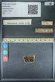 http://mczbase.mcz.harvard.edu/specimen_images/ent-lepidoptera/images/2013_09_28/IMG_150141.JPG