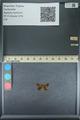 http://mczbase.mcz.harvard.edu/specimen_images/ent-lepidoptera/images/2013_09_28/IMG_150143.JPG