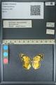 http://mczbase.mcz.harvard.edu/specimen_images/ent-lepidoptera/images/2013_10_12/IMG_150488.JPG