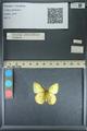 http://mczbase.mcz.harvard.edu/specimen_images/ent-lepidoptera/images/2013_10_12/IMG_150512.JPG